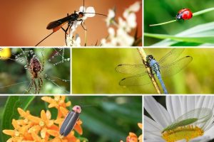 Insects named as the main food for the future of humanity